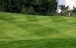 Verde do golfe Fotografia de Stock Royalty Free