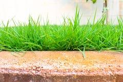 verde do gramado Foto de Stock Royalty Free