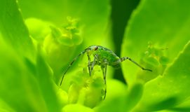 Verde do néon Imagens de Stock Royalty Free