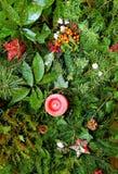 Verde do Natal   Imagem de Stock Royalty Free