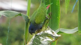 Verde do papagaio da natureza da avenida vídeos de arquivo