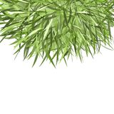 Verde do quadro da grama para seu projeto Imagem de Stock