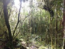 Verde do siempre de Bosque Fotografia de Stock