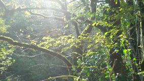 Verde do sol da natureza da floresta vídeos de arquivo