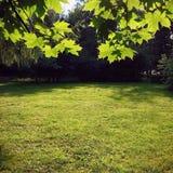 Verde do verão Imagens de Stock