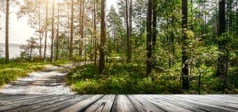 Verde do verão de Forest Ecology imagem de stock royalty free
