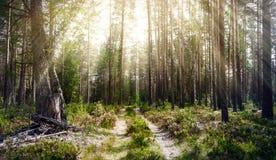 Verde do verão de Forest Ecology imagens de stock royalty free