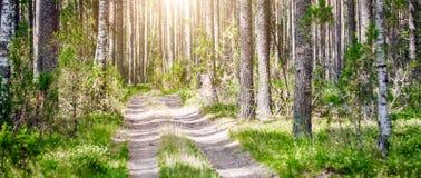 Verde do verão de Forest Ecology foto de stock