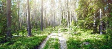 Verde do verão de Forest Ecology fotografia de stock royalty free