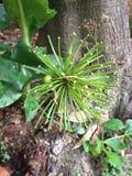 Verde dos tentáculos da flor Imagem de Stock Royalty Free