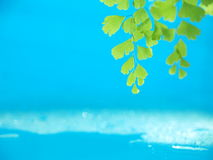 Verde e água Fotos de Stock Royalty Free