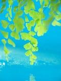 Verde e água Fotografia de Stock Royalty Free