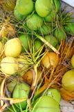 Verde e amarelo frescos da colheita da colheita dos cocos Imagens de Stock