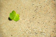 Verde e areia Imagens de Stock