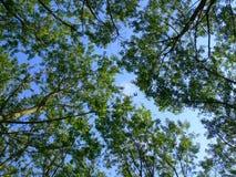 Verde e azul Fotografia de Stock