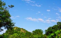 Verde e azzurri di foresta Immagini Stock