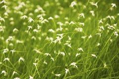 Verde e bianco Fotografia Stock