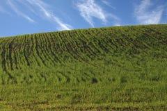 Verde e cielo blu dei livelli Immagini Stock Libere da Diritti