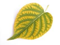 Verde e colore giallo Fotografie Stock Libere da Diritti
