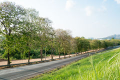 Verde e estrada Foto de Stock Royalty Free