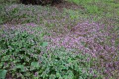 Verde e fresco Flores selvagens cor-de-rosa de florescência com plantas novas imagens de stock royalty free