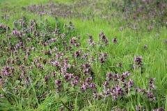 Verde e fresco Flores selvagens de florescência com plantas novas foto de stock royalty free