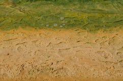 Verde e marrone Immagini Stock Libere da Diritti
