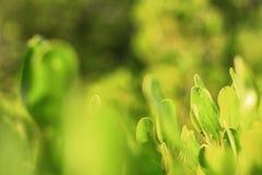 Verde e ouro das folhas foto de stock