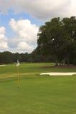 Verde e pino do campo de golfe Imagens de Stock
