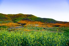 Verde e Poppy Coated Hills em Walker Canyon foto de stock