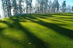Verde e sombra Fotografia de Stock Royalty Free