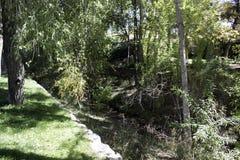 Verde eccellente dal fiume Fotografia Stock