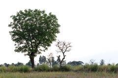 Verde ed alberi morti con erba Fotografia Stock Libera da Diritti