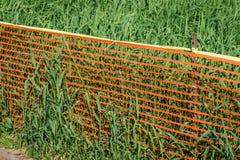 Verde ed arancio Immagine Stock Libera da Diritti