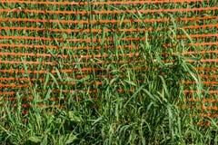 Verde ed arancio Fotografia Stock