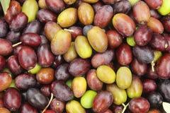 Verde ed il nero di olive Fotografia Stock