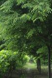 Verde em abril fotografia de stock royalty free