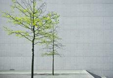 Verde en gris Imagen de archivo