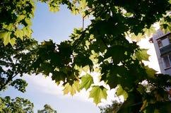 Verde en luces de la primavera imagen de archivo