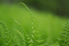 Verde en un mar del verde Imagenes de archivo