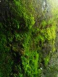 Verde encantador Imágenes de archivo libres de regalías