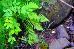 Verde, felce e pietre bagnate immagini stock libere da diritti