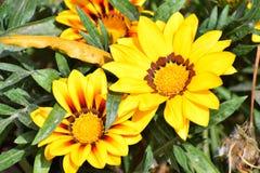 Verde felice di fotografia gialla della natura del fiore fotografie stock