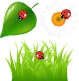 Verde fijado con el Ladybug. Vector Imagen de archivo libre de regalías