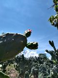 Verde Flor del giardino della natura del cielo del cactus fotografia stock