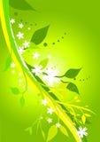 Verde floreale fresco Fotografia Stock