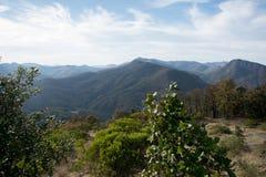 Verde floresta fotografia de stock royalty free