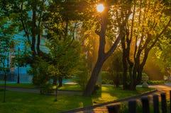 Verde floresta Raios brilhantes do sol que passa através dos ramos das árvores Fotografia de Stock Royalty Free