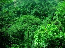 Verde freddo Fotografia Stock