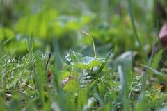 Verde fresco Fotografia Stock Libera da Diritti